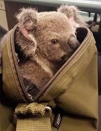 Ciel ! Qui a pris mon sac !