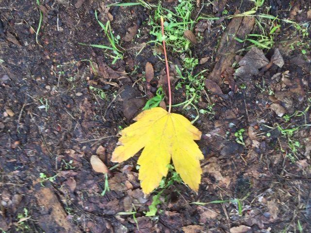 Le temps des feuilles mortes