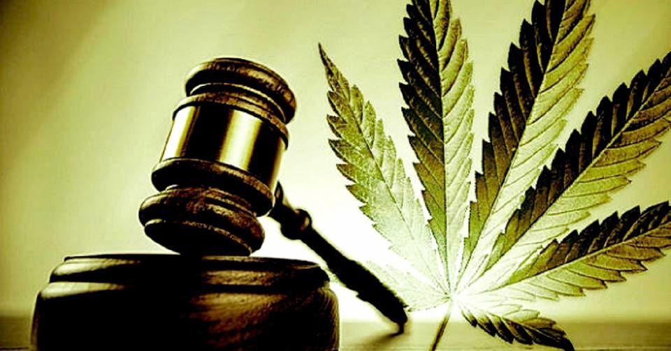 La France se penche sur la possibilité de légaliser le cannabis thérapeutique