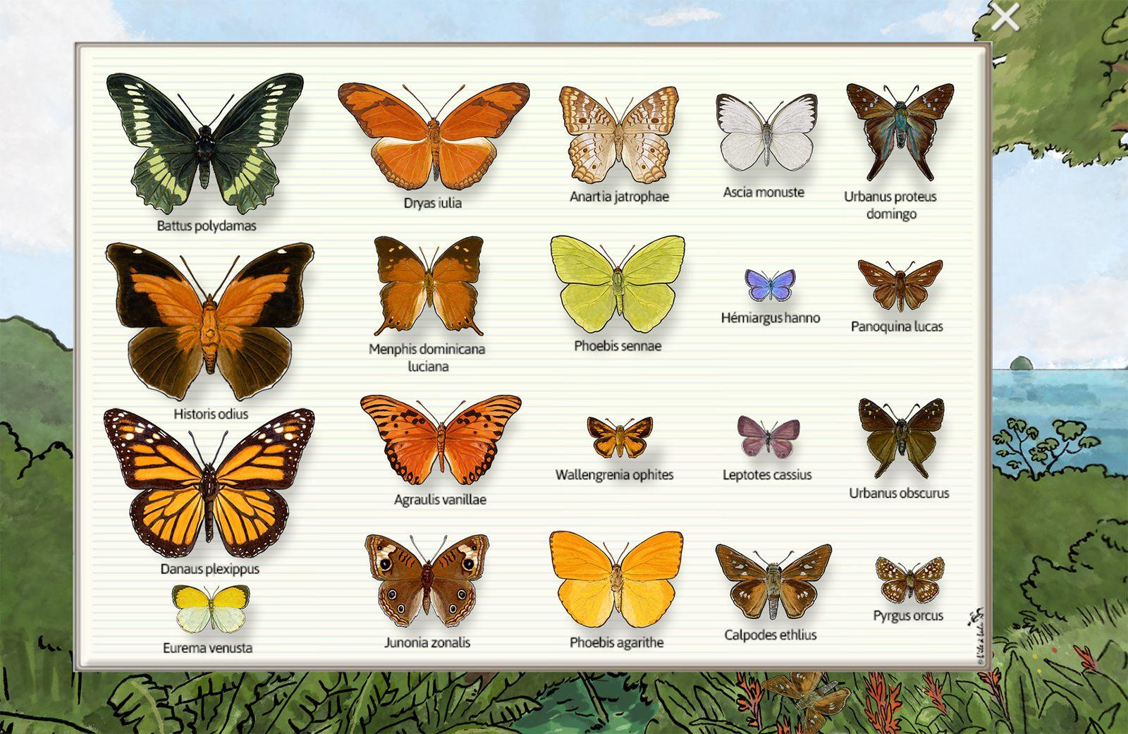 Les 20 papillons représentés dans la visite