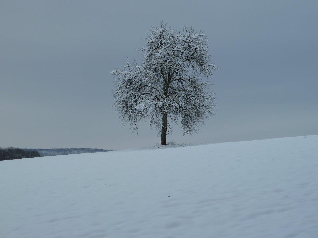 9 décembre 2012, Mooslargue sous la neige (photo R. Burglin)