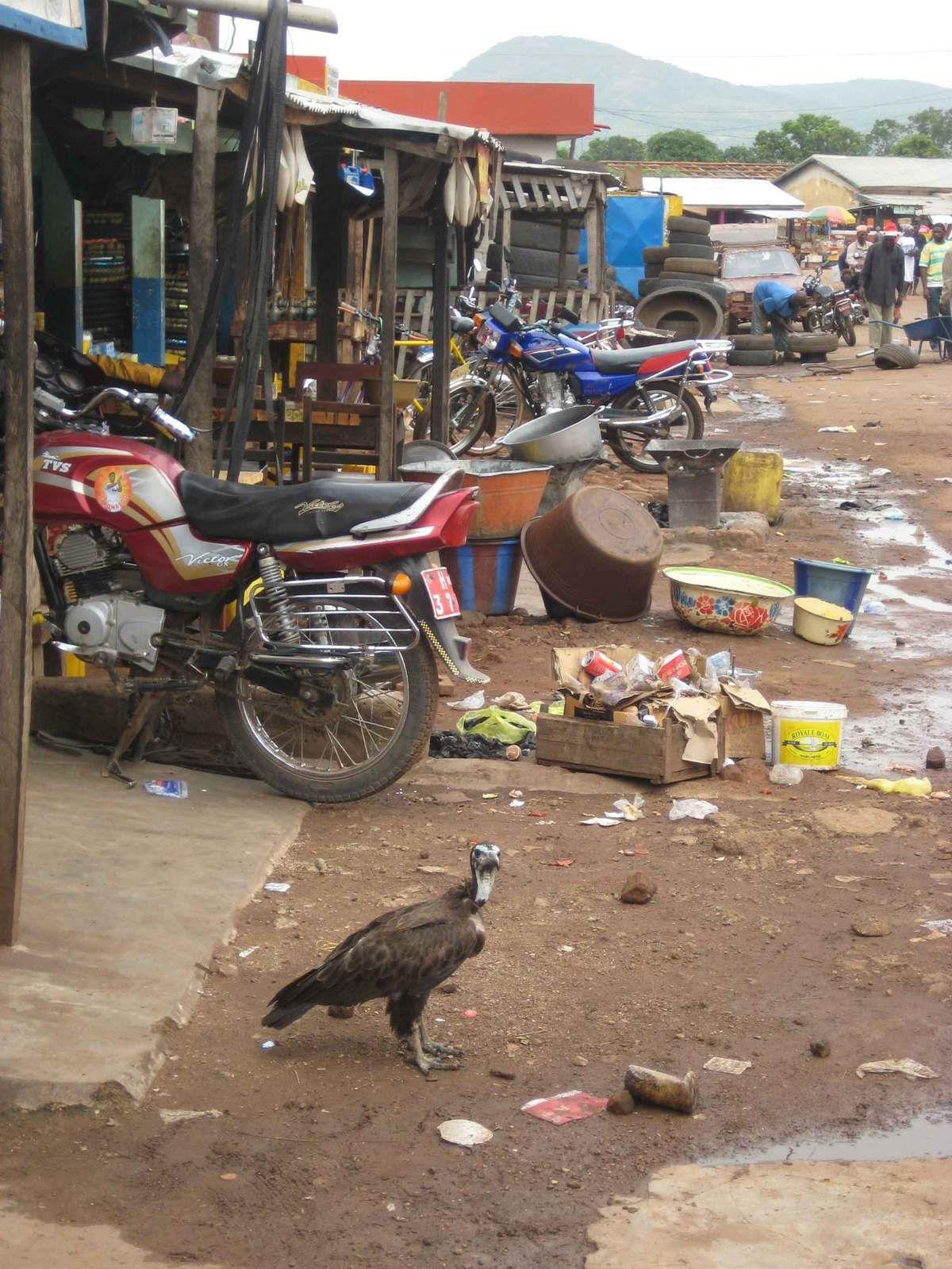 Calle de mercado en Guinea, extrema pobreza y hasta buitres.