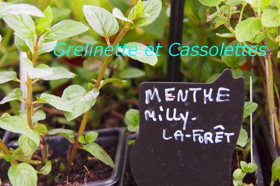 Hysope, Plante Huitre, Angélique, Consoude… Hortiflor Bureau à Courson