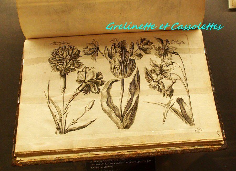 Les Fleurs du Grand Condé à Chantilly