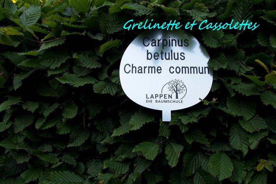 Jardins Jardin, 2015