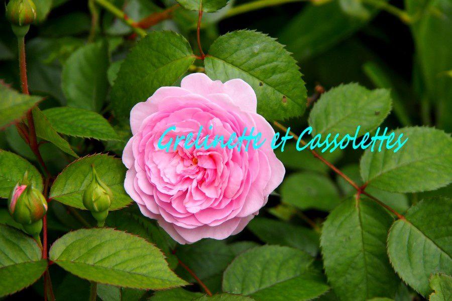 Tour au Jardin, Fin Juin et Astuces pour s'adapter au trop plein de pluie