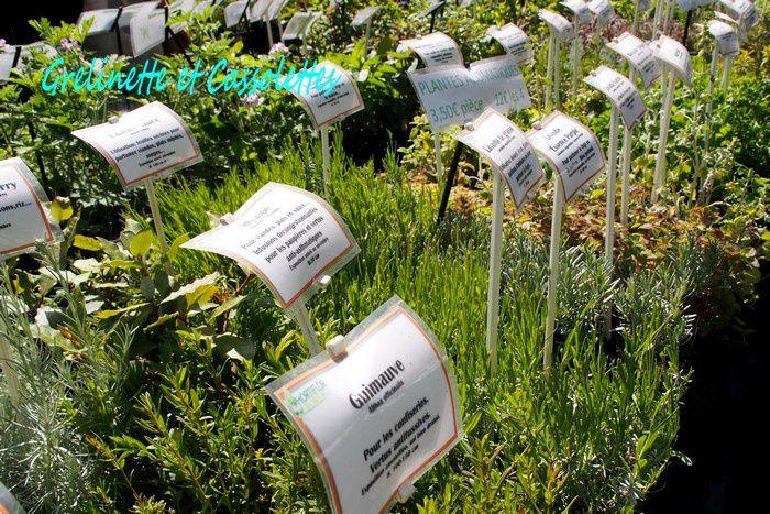 Plantes à parfums chez Hortiflor Bureau