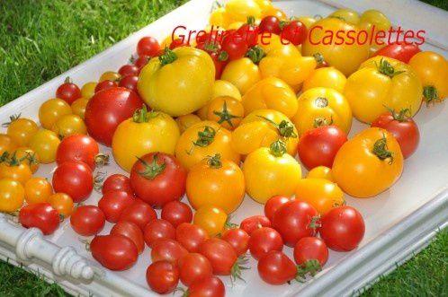 Plantations de Tomates : on y va !