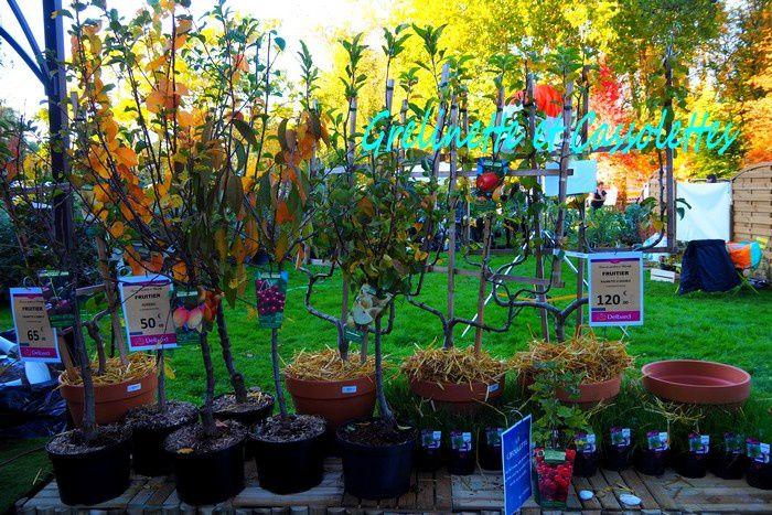 Des fruitiers en tige ou en palmette pour structurer ou délimiter le jardin