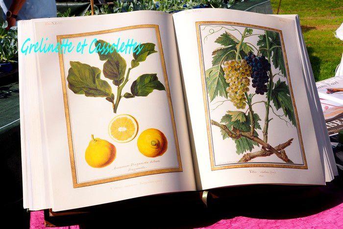 Journées des Plantes, Les Favorites de Chantilly, Suite