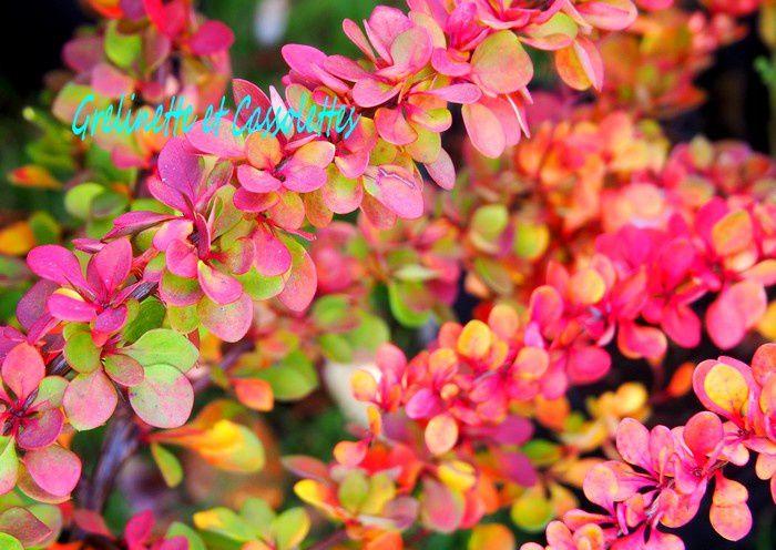 Les Journées des Plantes de Chantilly