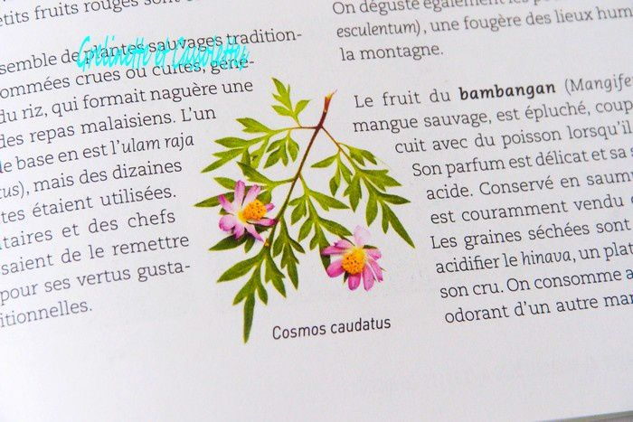 Plantes Sauvages Comestibles, François Couplan