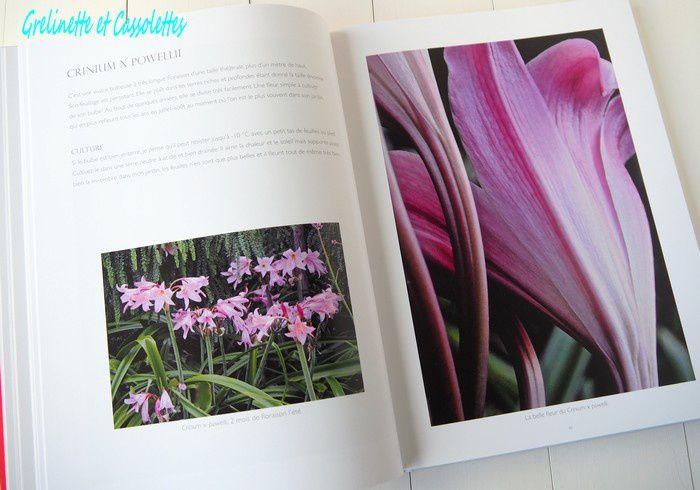 Fleurs Théâtrales au Jardin de Pellinec
