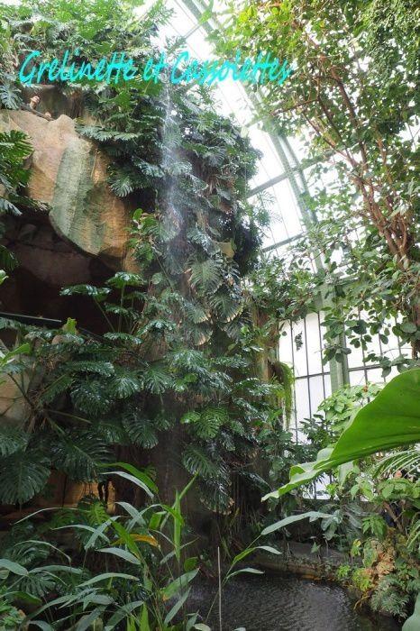 Philodendrons aux Serres du Jardin des Plantes