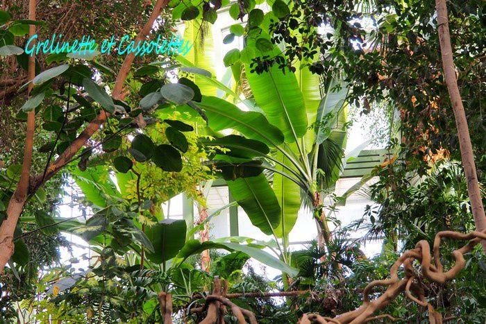 Les Grandes Serres du Jardin des Plantes 2