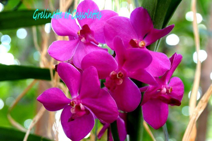 1001 Orchidées, aux Grandes Serres du Jardin des Plantes