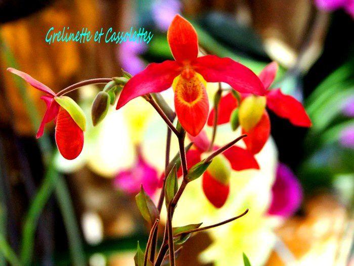 1001 orchidées, 2