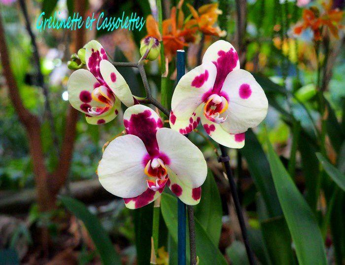 1001 Orchidées, 3