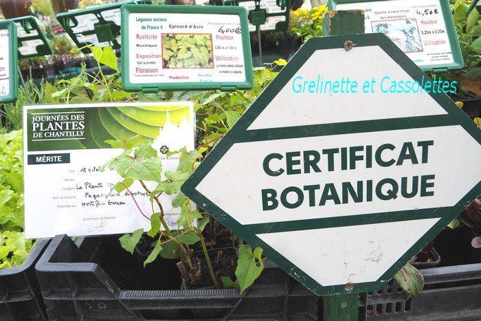 Mes trouvailles chez Hortiflor Bureau aux Journées des Plantes de Chantilly