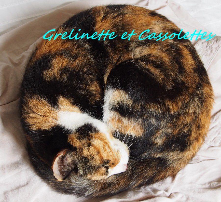 Les secrets d'Hortense, petit Ange au Paradis des Chats
