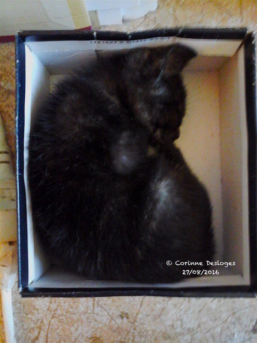 Calypso a adopté une boîte de botillons, pointure 23, pour dormir.