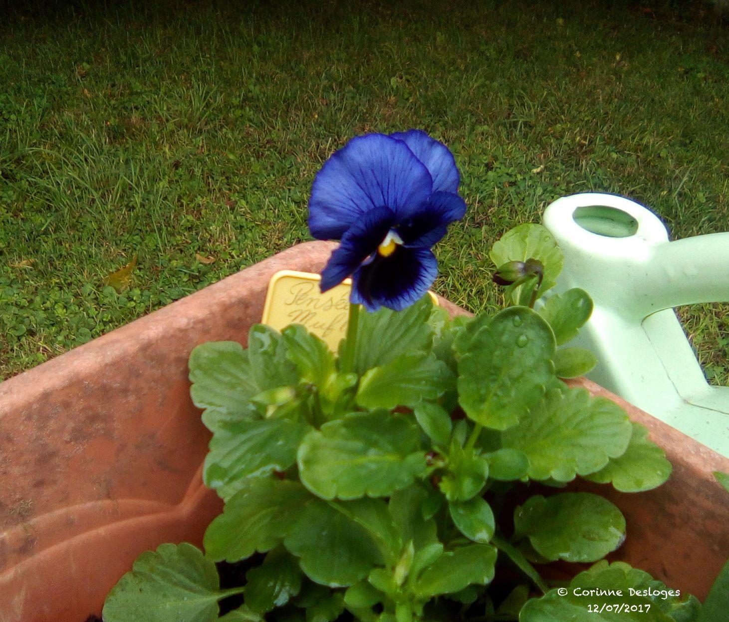 """ça, c'est mon côté """"fleur bleue"""" !"""