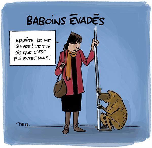 Les babouins, tous les mêmes, ils ne savent pas se tenir.