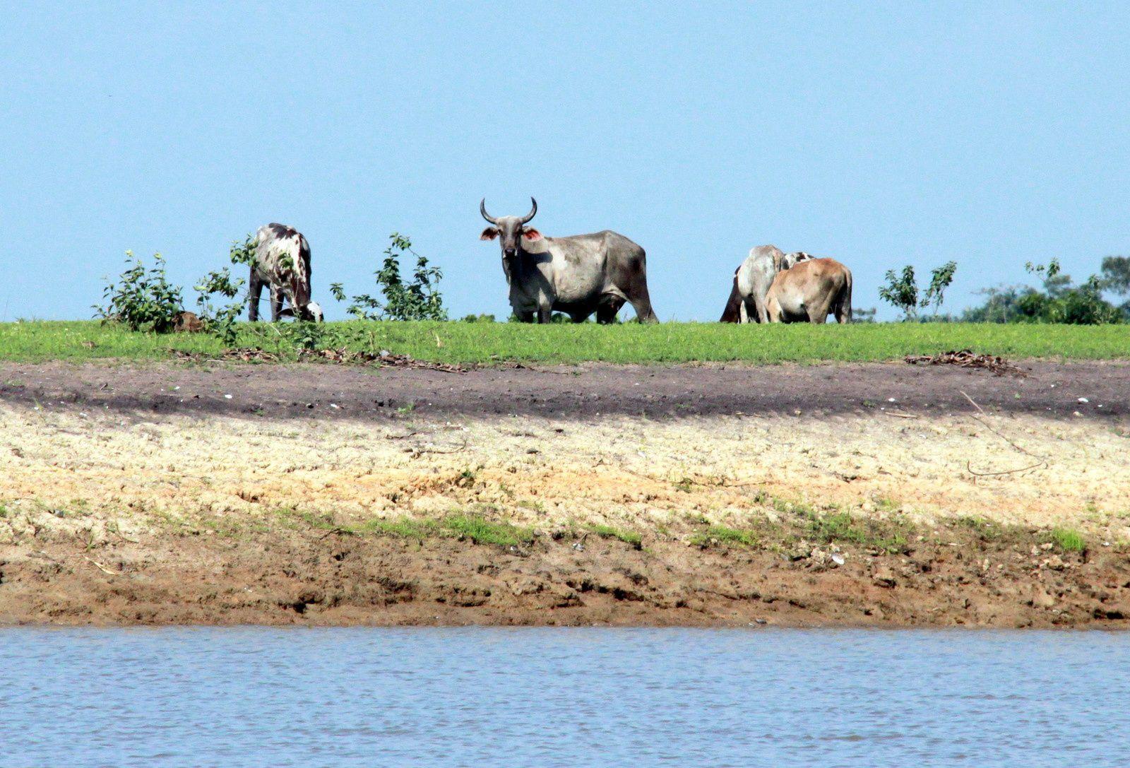 1) jour du coté du canal ituqui