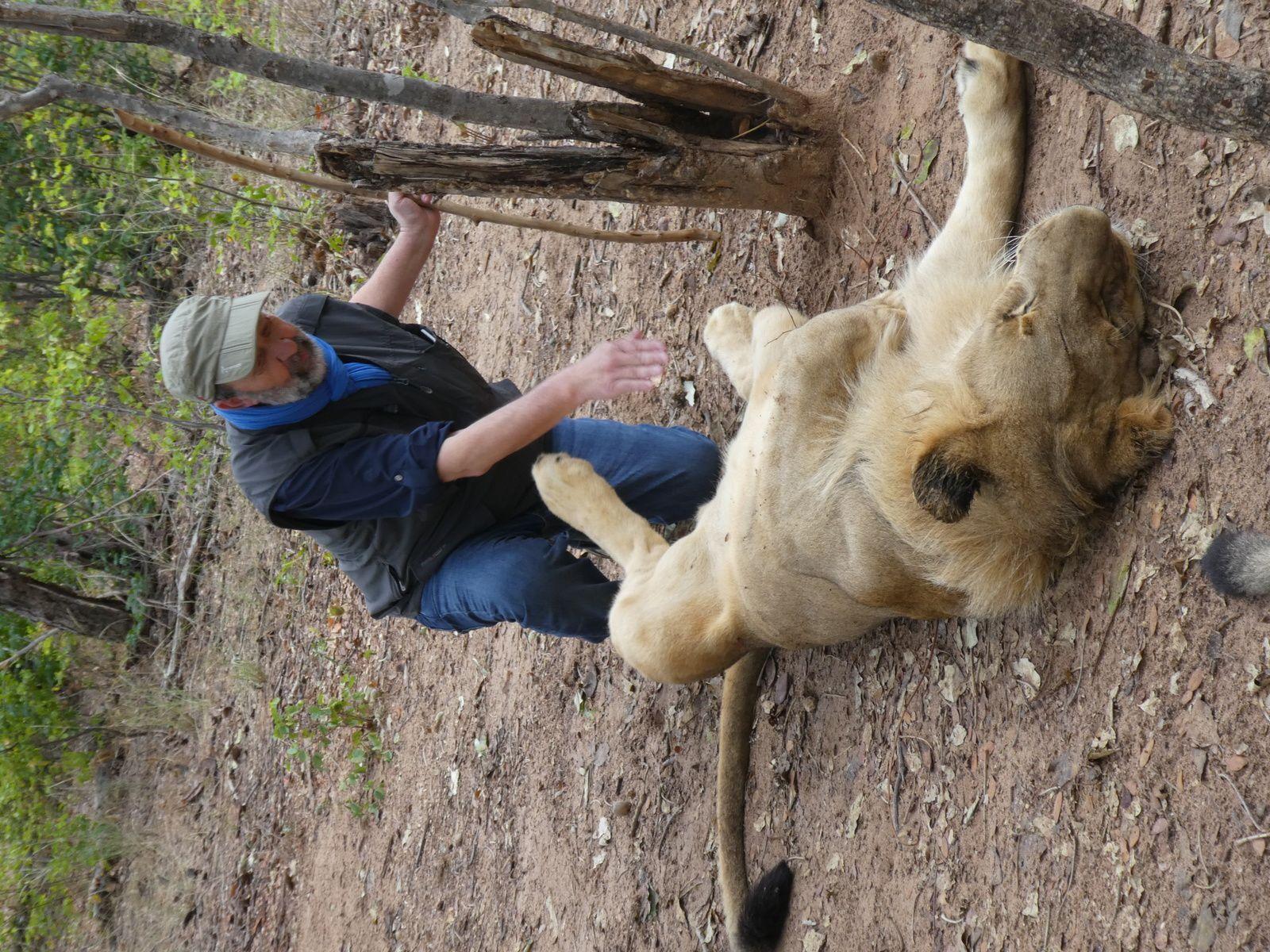 DERNIER JOUR, victoria falls et  des lions
