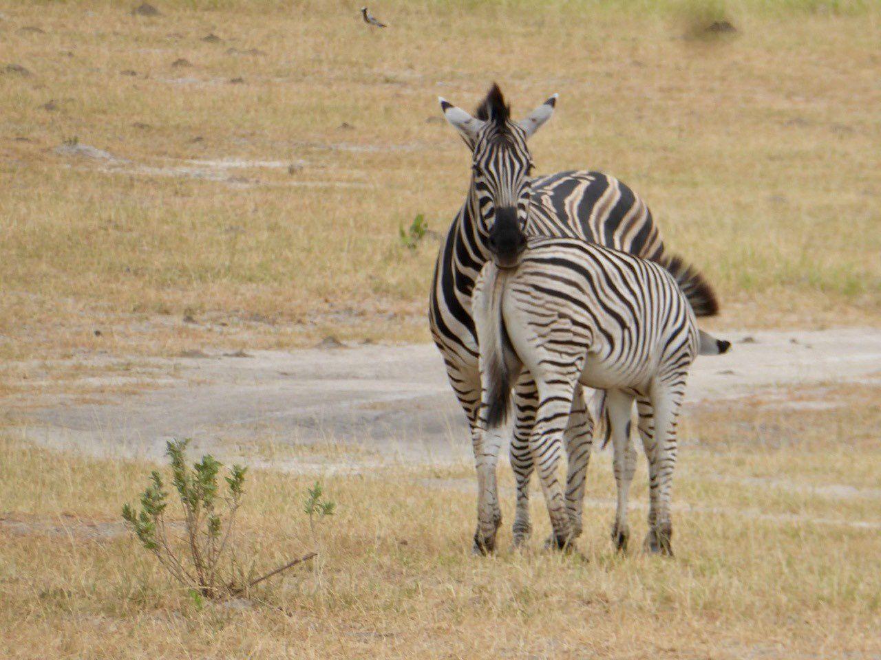 botswana, tout dernier regard ,merci africacoeurs