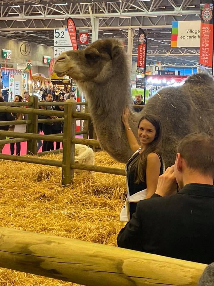salon de l'agriculture : les camelidés sont là  !