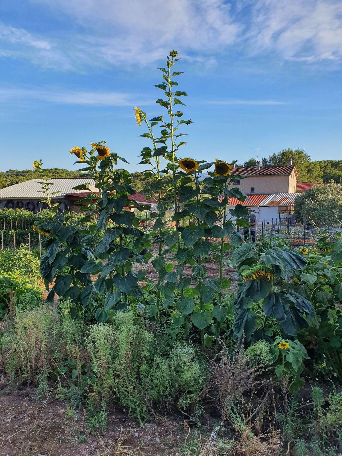 un jardin d'eden : le potager de pierrot