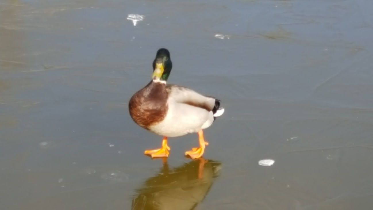 Oiseaux du parc de la Préfecture par un après-midi glacial