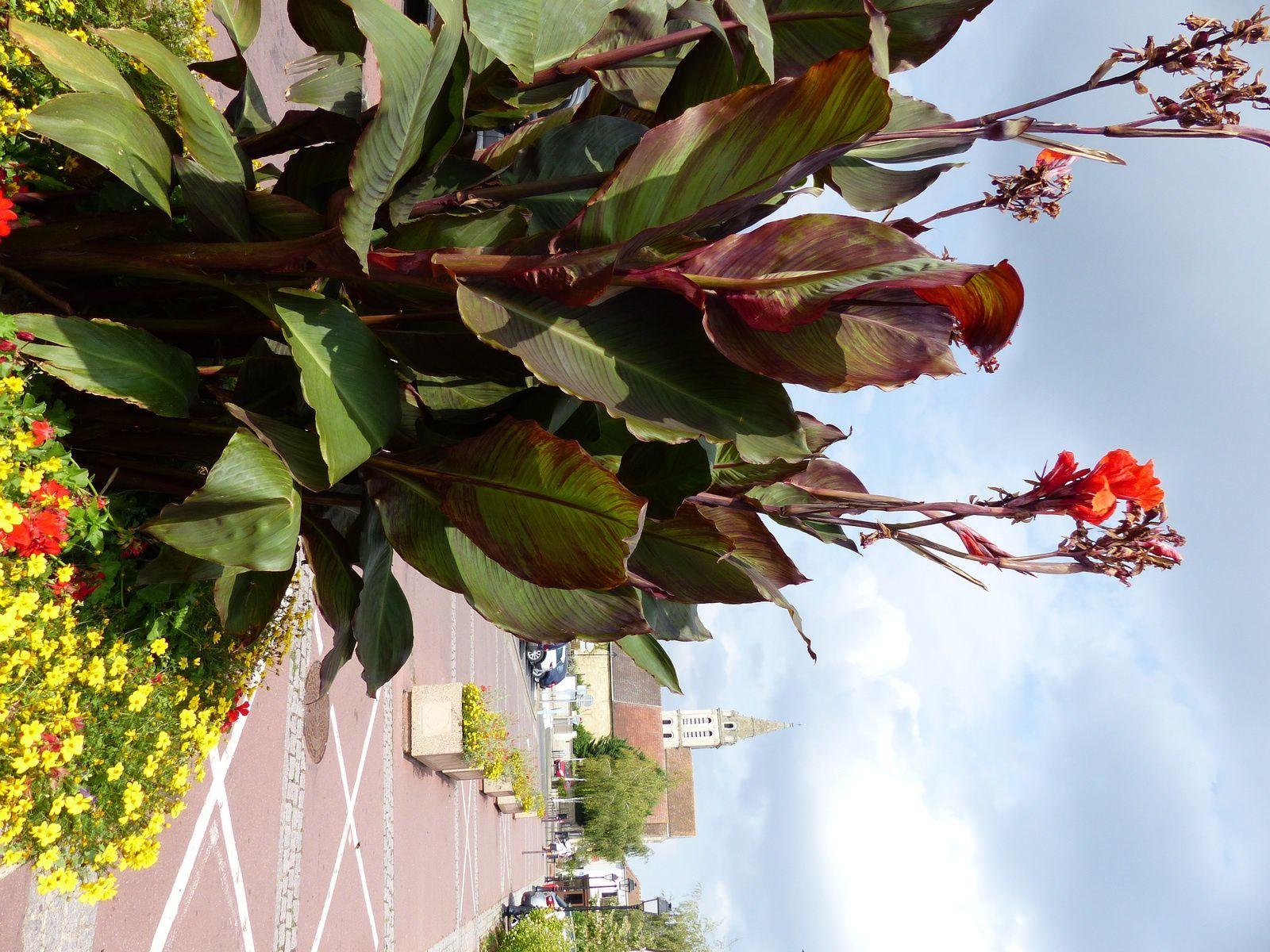 Massifs fleuris à Cergy Village