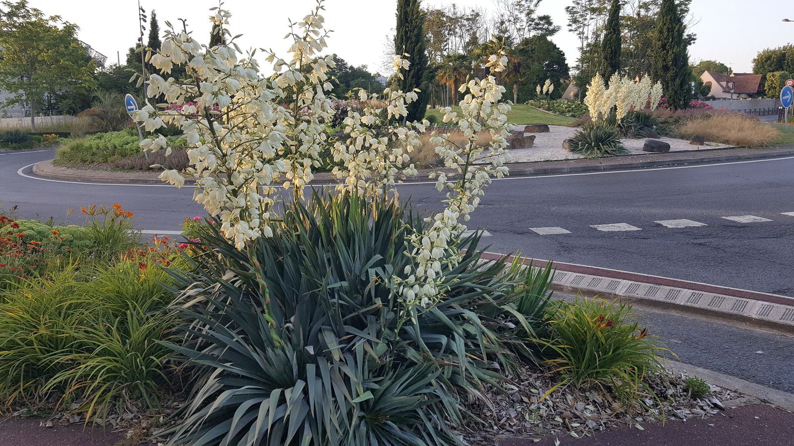 Les beaux massifs fleuris de Cergy Pontoise