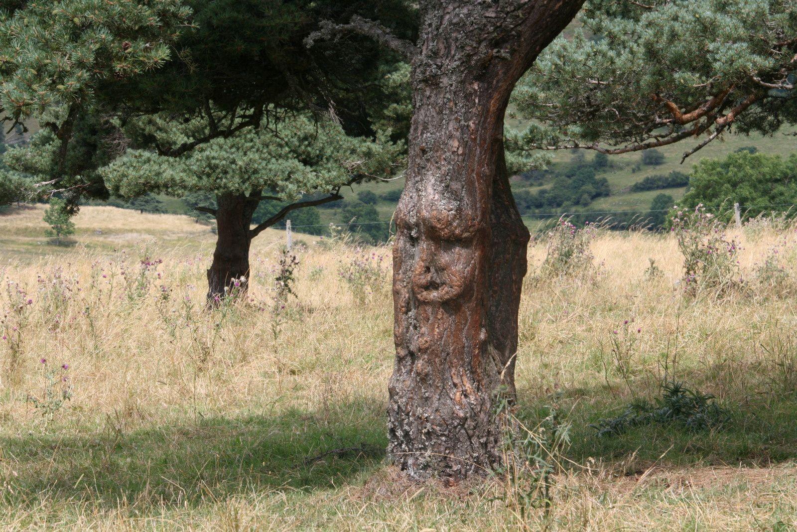 visage inscrit dans l'écorce d'un arbre