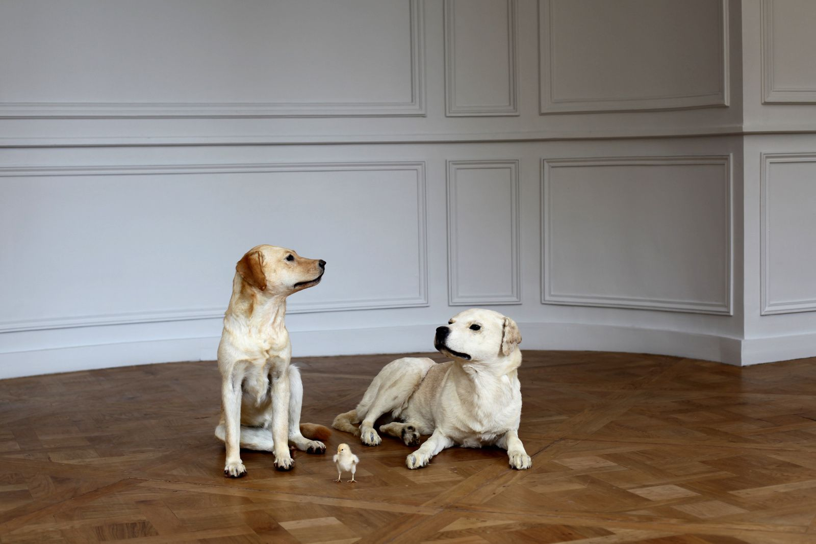"""Sans titre"", 2001 de Maurizio CATTELAN - Courtesy Collection Privée © Photo Éric Simon"