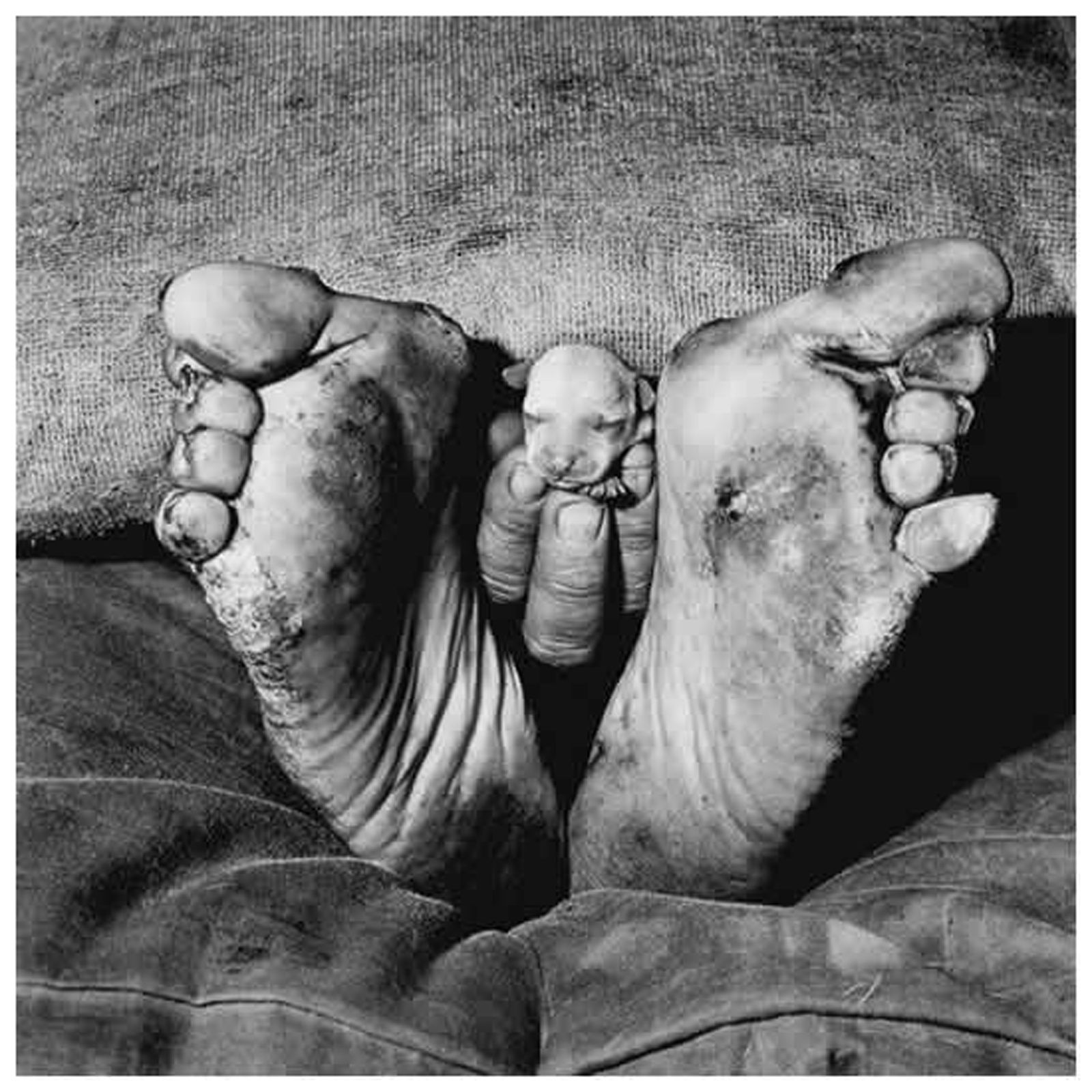 """Roger Ballen, """"Puppy between feet"""", 1999; from the series """"Outland."""" Courtesy Xavier Hufkens Gallery, Brussel."""