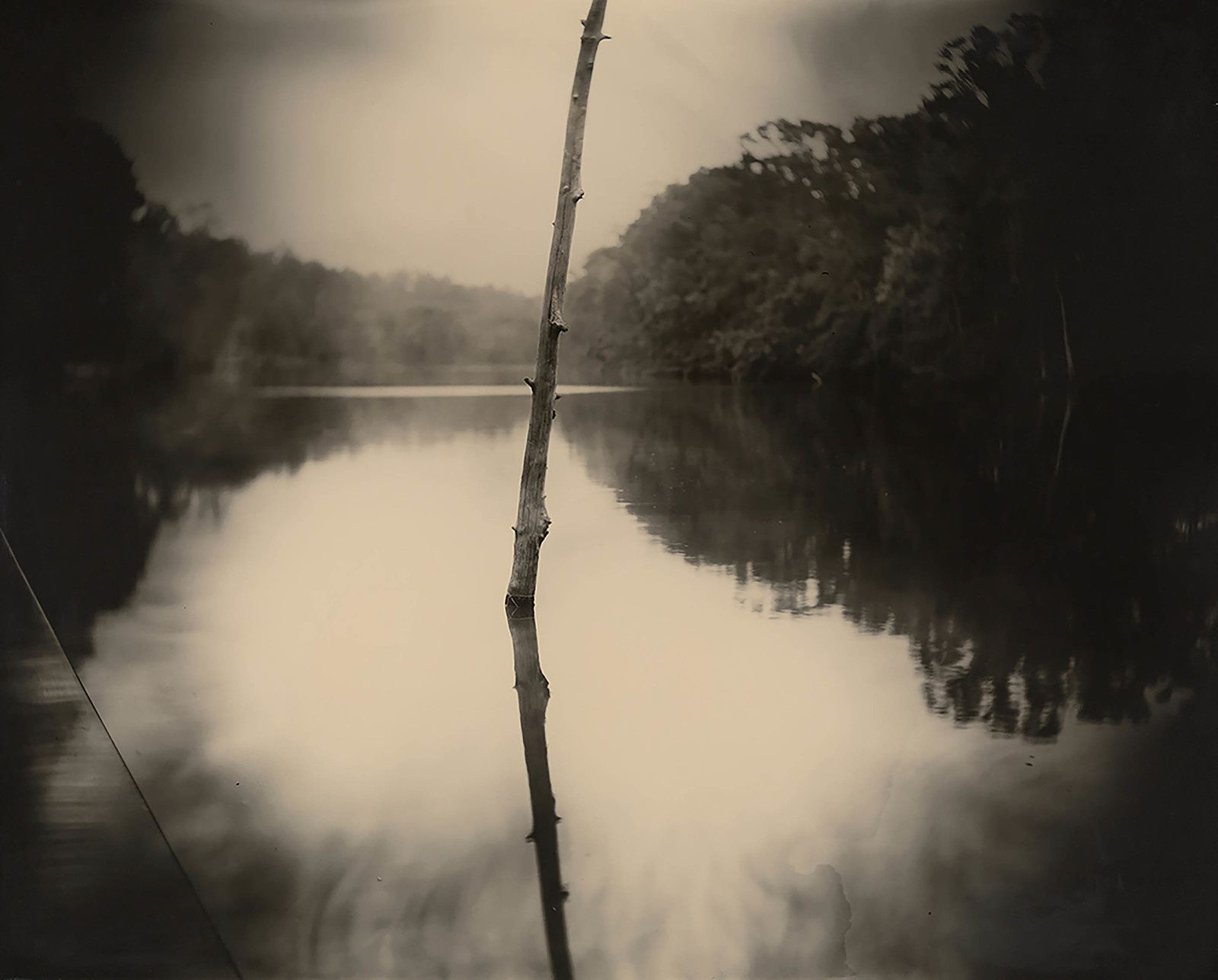 """Deep South, Untitled (Stick)"", 1998 de Sally MANN - Courtesy of the New Orleans Museum of Art: Collection of H. Russell Albright, M.D. © Sally Mann"