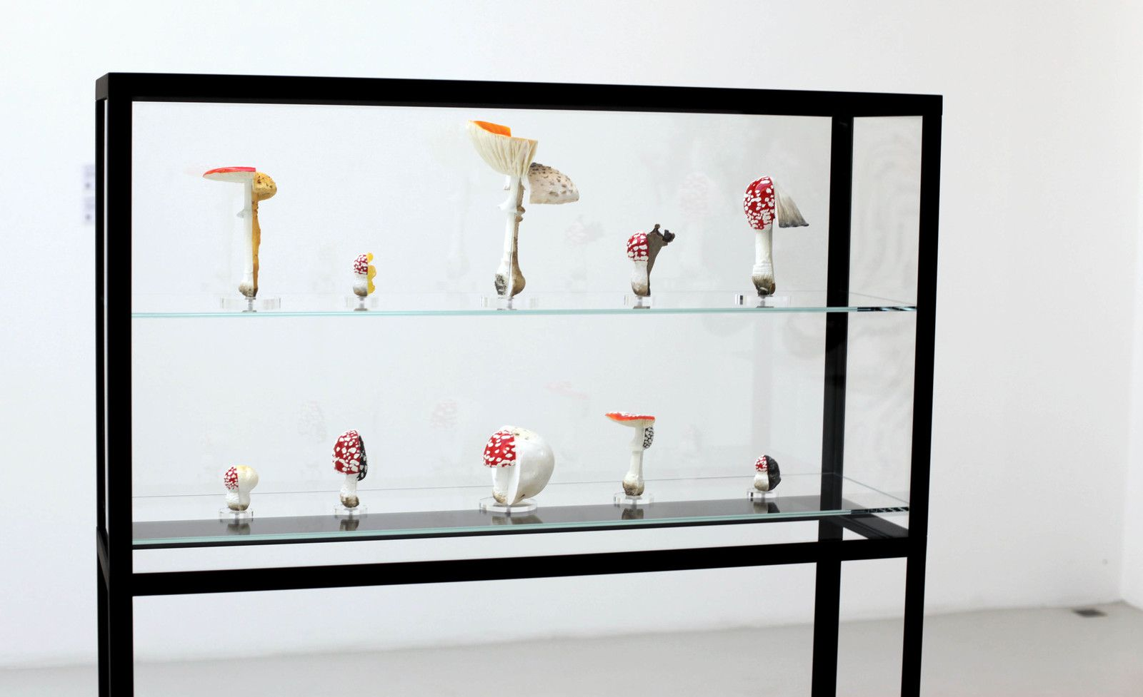 """Double Mushroom Vitrine"", 2018 de Carsten HÖLLER - Courtesy Air de Paris © Photo Éric Simon"