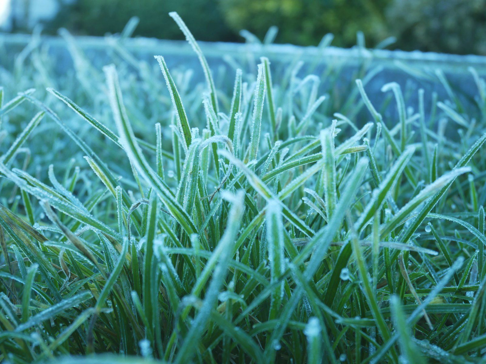 Promenade en ville, gel et brouillard: le jardin hiberne...