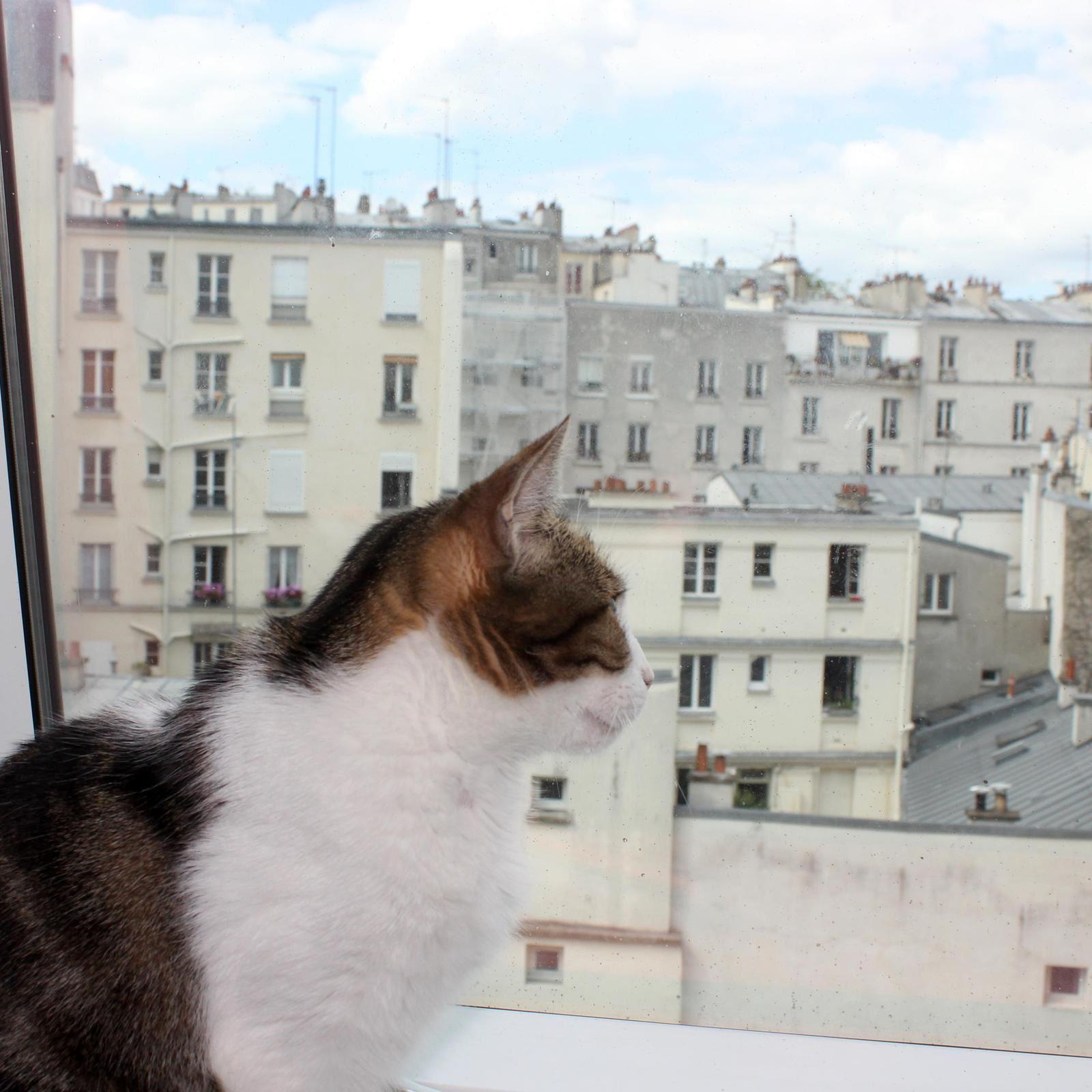 Les toits de Montmartre. Photos.