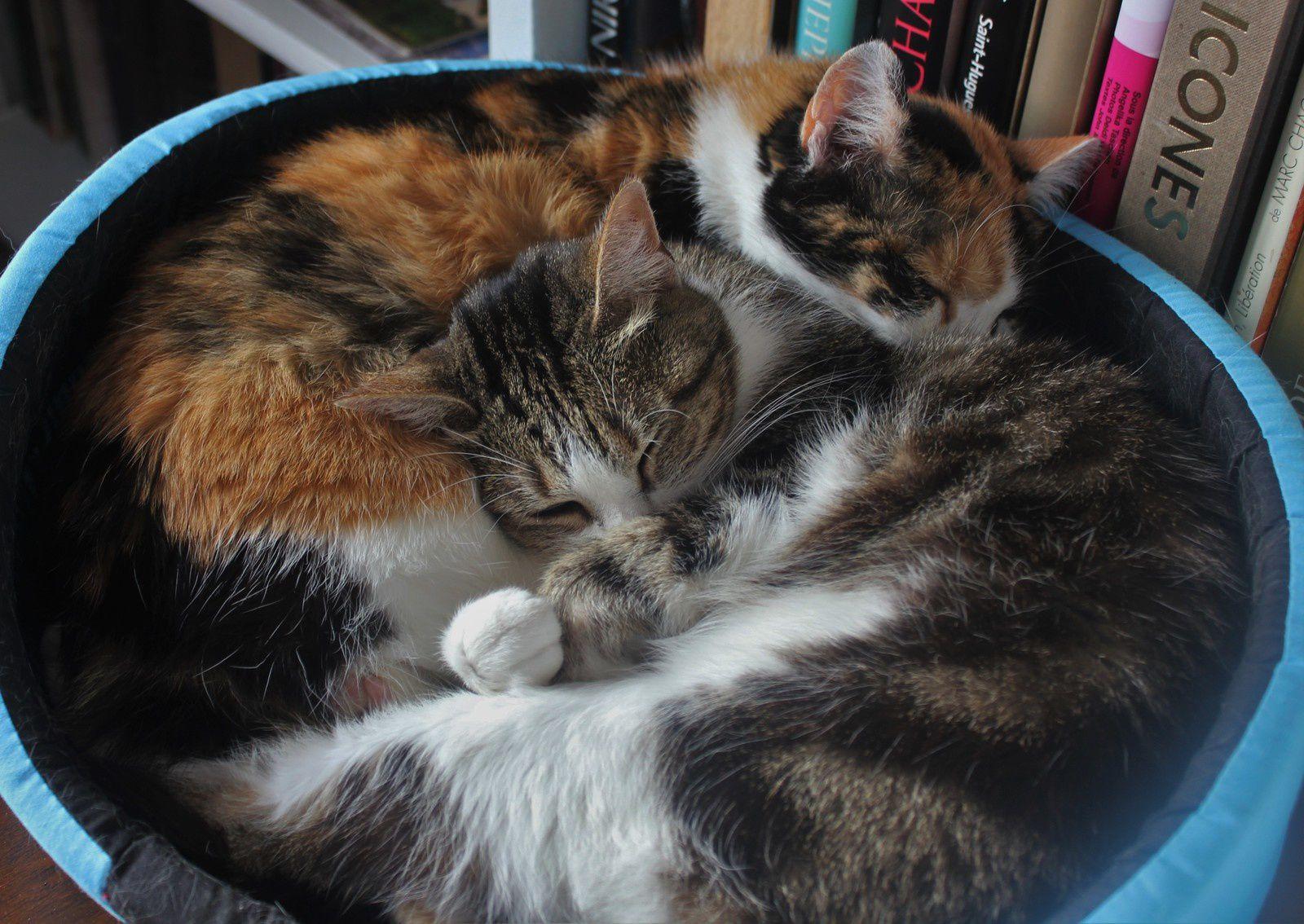 Deux chattes. Amour sans paroles.