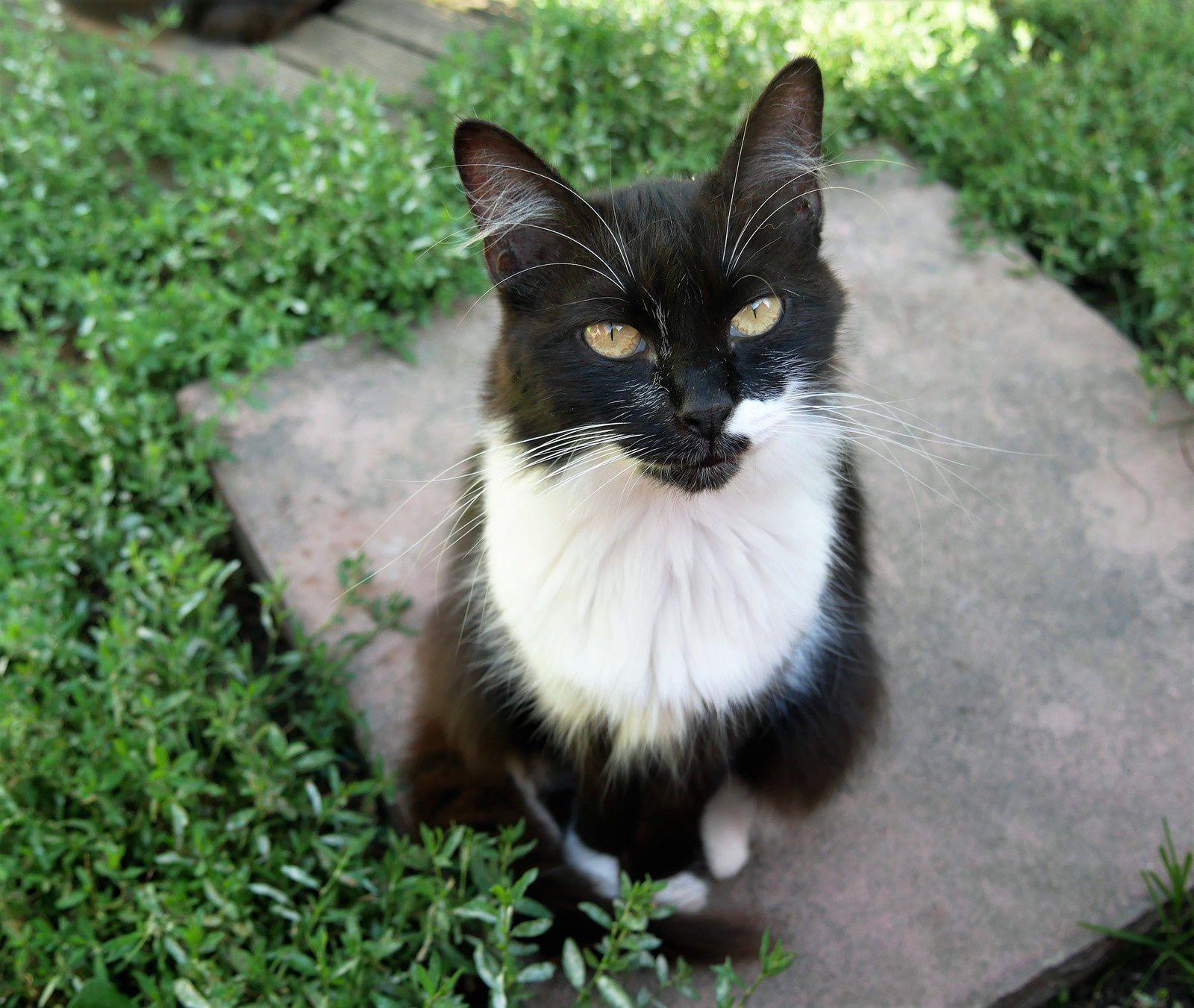 Chiffon, la plus adorable. Elle a hélas une leucémie.