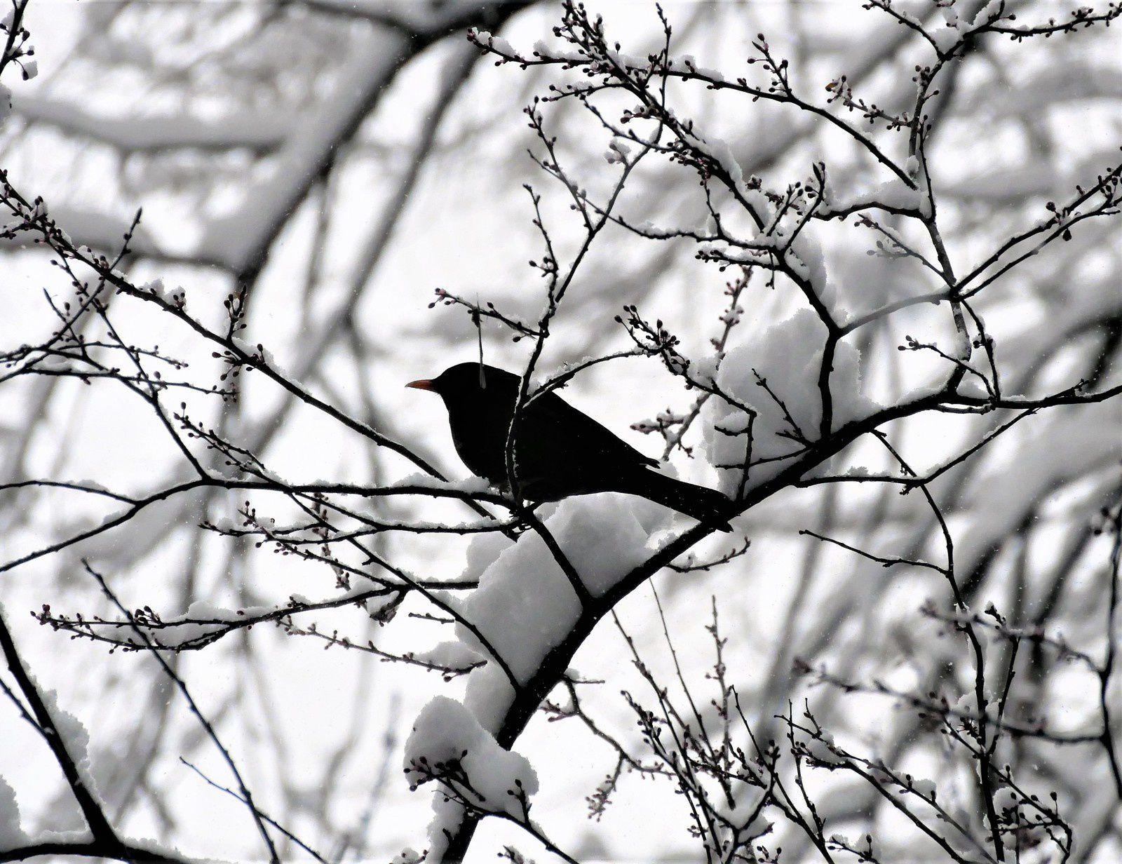7 février. Photos de neige à Montmartre.