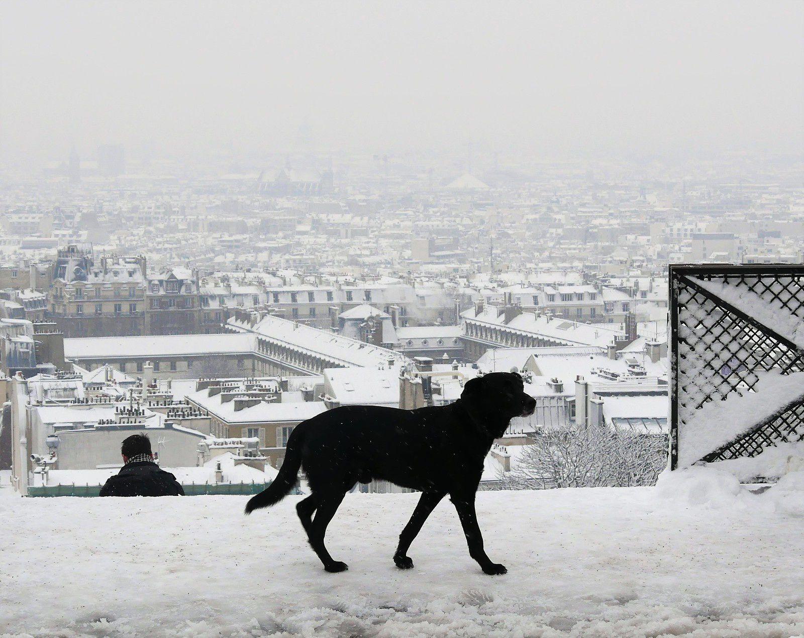 Chien noir et blanche neige, rue du Cardinal Dubois.