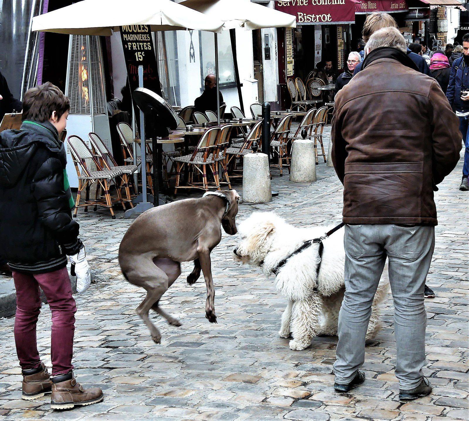 Février. Photos de Montmartre au jour le jour.