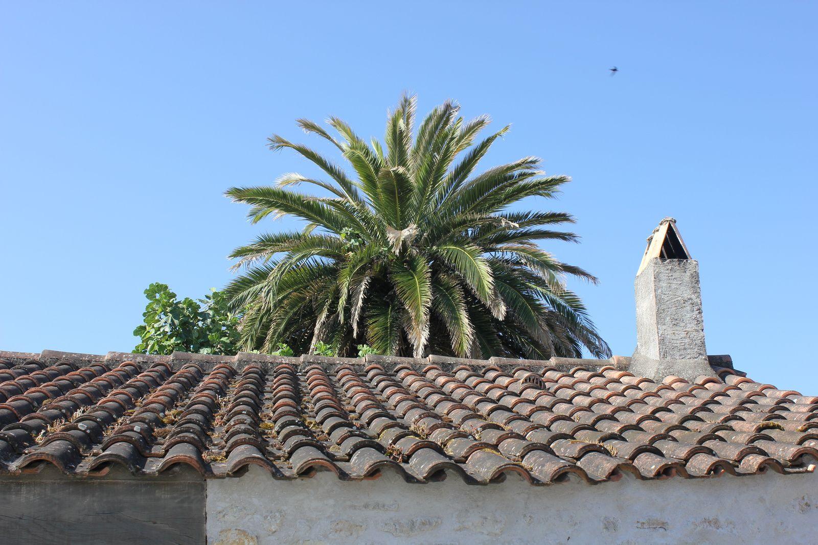 Le Grand-Village Plage. 1- Le vieux village.