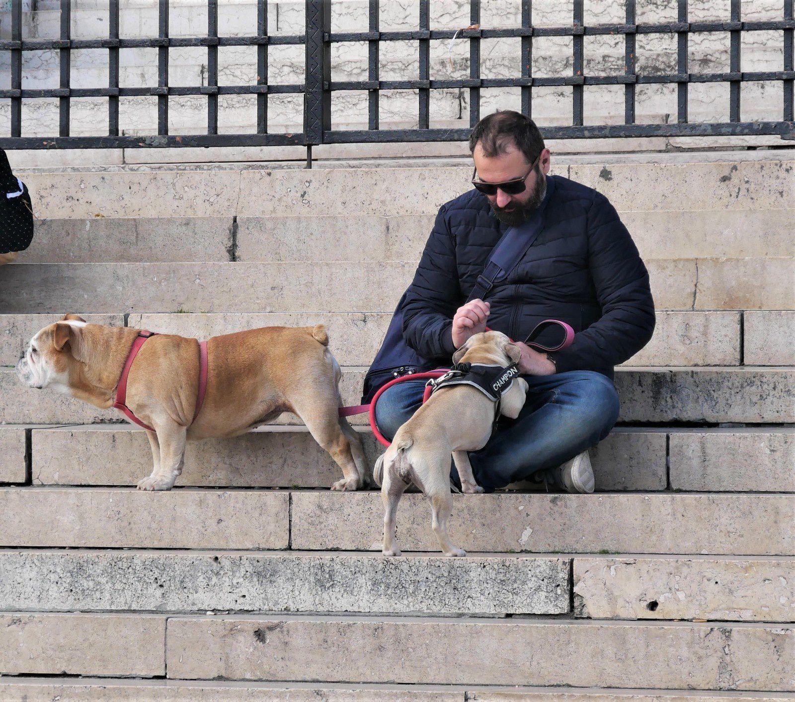 Chiens et maîtres à Montmartre. Une année de chiens!