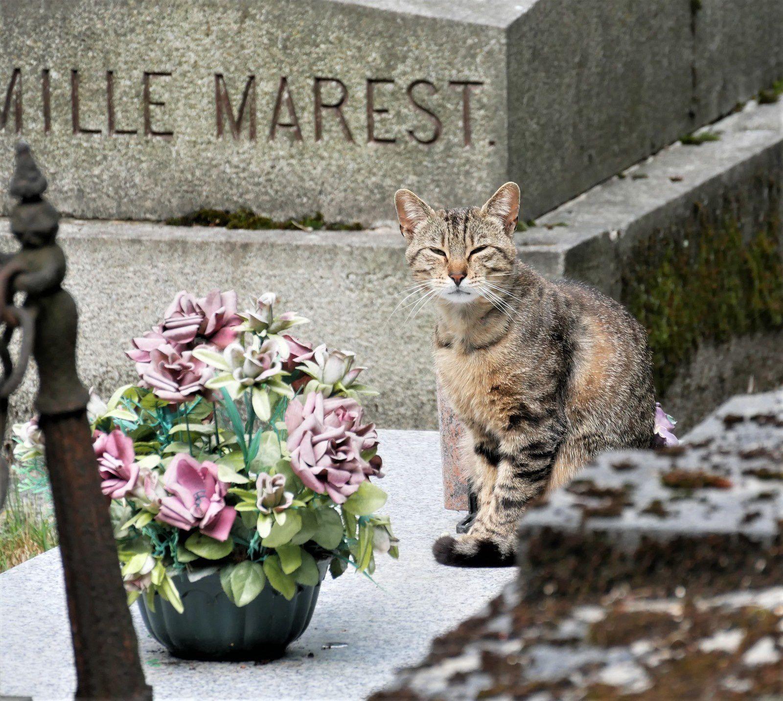 Une photo du cimetière Montmartre. Le jour de Pâques. Pascale, Ludivine et le chien Gégé.